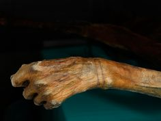 Otzi Confirms: Tattoos Have Always Been Cool - Radiolab