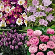 The Serenity Garden - 100 flower bulbs, bulbs direct