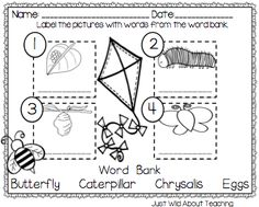 Just Wild About Teaching: Bopping for Butterflies - Butterfly Unit