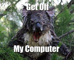 ya dude do what the koala says!