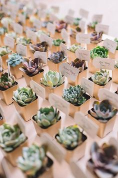 """Arrange a vast selection of tiny succulents for guests to choose from for a rustic wedding favor that doubles as an escort """"card"""". favors ideas 15 Rustic Wedding Favors Your Guests Will Love Wedding Favors And Gifts, Succulent Wedding Favors, Rustic Wedding Favors, Wedding Table, Party Favours, Wedding Centerpieces, Nautical Wedding, Wedding Favours Useful, Wedding Place Cards"""