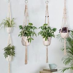 Handmade Macramé Hangers Indoor hanging planters are so on-trend! They're an interesting way to display houseplants in any room. Show your plants some love with this modern, vintage-inspired Handmade Macramé Hangers. Shop Now while it's on SALE! Diy Hanging Shelves, Plant Shelves, Floating Shelves, Floating Plants, Macrame Plant Holder, Macrame Plant Hangers, Plantas Indoor, Cactus E Suculentas, Dulux Valentine