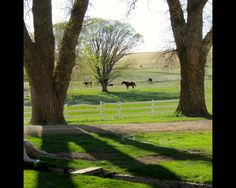 Ranches For Sale, Land For Sale, New Mexico, Cattle, Hunting, Plants, Denver, Phoenix, Cow