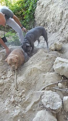 Pedro quickly acted. With the help of his own pup, they began to meticulously remove the surrounding soil.