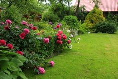 More from Andrey's garden in Russia | Fine Gardening