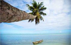Palm tree defying gravity - Bahamas - http://grandescapades.com/destinations/