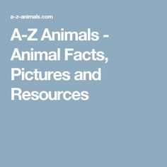 A-Z Animals - Animal Facts, Pictures and Resources