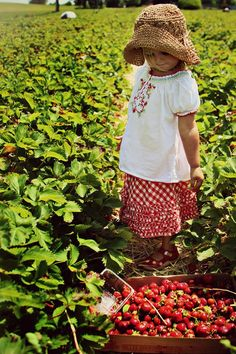 Country Kids - in the strawberry fields! Strawberry Picking, Strawberry Garden, Strawberry Patch, Strawberry Hill, Country Charm, Country Life, Country Girls, Country Living, Cool Baby