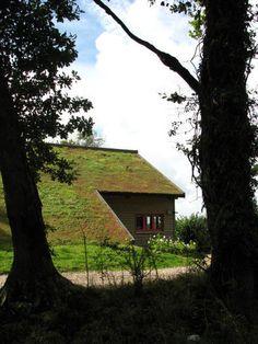 Moderne Dachbegrünung auf einem Schrägdach ... A modern house with a living roof…