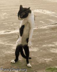 Do the creep   Funny cat