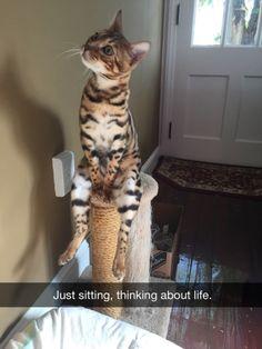 ...just sittin'...thinkin' about life.