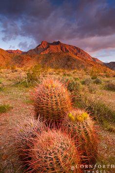 Anza Borrego Desert, California