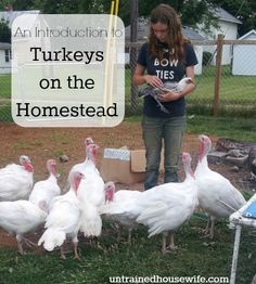 An Introduction to Turkeys on the Homestead