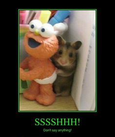 Schattig muisje doet verstoppertje