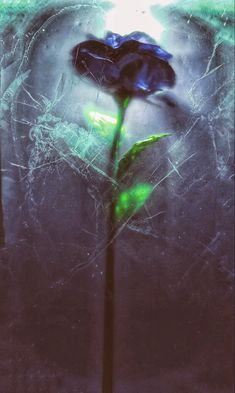 By Christina Baltais - It's #SevereME Awarenesss week. 1/4 of #pwME are severe, yet ME remains the lowest funded disease in proportion to disease burden. I froze a blue rose to symbolize the abrupt halt and shattering of ones life when you develop this disease. #MECFS #meawarenesshour #severeMEweek One Life, Frozen, Artists, Eyes, Blue, Human Eye, Artist, Frozen Movie