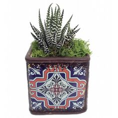 Moroccan Rosette Planter Live Succulent Plant Orange Shield 3 X 3 X 5... ($9.99) ❤ liked on Polyvore featuring home, outdoors, outdoor decor, grey, home & living, outdoor & gardening, succulent planters, outdoor garden planters, garden planters and garden decor