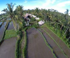Glamping Sandat in Bali : wonderful rice-fileds!!