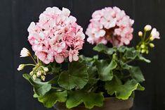 Växthus av gamla fönster Porch Garden, Yard Art, Diy Furniture, Floral Wreath, Plants, Pink, Outdoor, Gardens, Garden Design