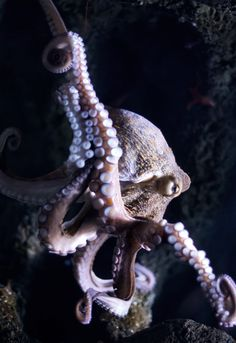 2630 best untouchable octopuses images in 2019 marine life water