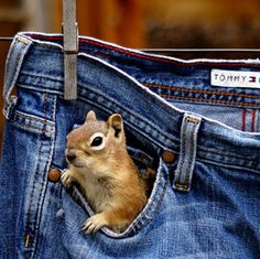 i got a squirrel in my pocket