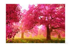 Mysterious Japanese Cherry Blossom Tree Sakura Render Kunstdruck