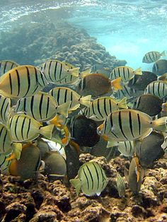 Snorkeling in Hanauma Bay, Hawaii.  The fish were beautiful and there were so many varieties.