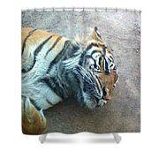 Sleeping Tiger Shower Curtain Sleeping Tiger Colorful