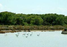 Parque natural de ses salines las salinas ibiza. eivissa