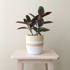 "8"" Planter 