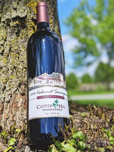 Our 2016 Cabernet Sauvignon - the king of our red wines - is a dry, big flavored, toasty-oaked beauty that pairs perfectly with those hearty grilled meats. Pick up a bottle at Clover Hill Vineyards & Winery today! Red Wines, Wine Wednesday, Grilled Meat, Cabernet Sauvignon, Sangria, Vineyard, Pairs, King, Bottle