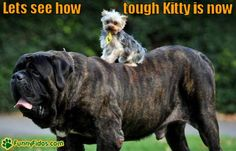 Really Big Dogs | funny-dog-picture-small-dog-big-dog