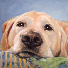 GoldenGirl, memorial portrait pet portrait in Oils by puci, by puciPetPortraits on Etsy Fashion Painting, Dog Portraits, Animal Paintings, Dog Art, Oeuvre D'art, Painting Inspiration, Drawings, Artwork, Oil Portrait