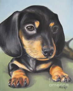 Painting - Dachshund Puppy by Jindra Noewi , Dachshund Quotes, Dachshund Art, Funny Dachshund, Dauchshund Puppy, Dapple Dachshund Puppy, Daschund, Pet Dogs, Dogs And Puppies, Dog Socks