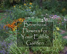 The Backyard Farming Connection: Beneficial Flowers For Your Edible Garden