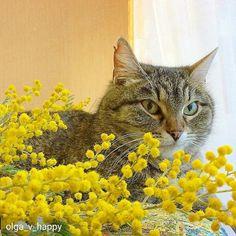 Автон @olga_v_happy -  Девочки должны быть всегда в цветах #мой_кот_мартовский для @kotobormot.ru #кот #котэ #котик #котики #инстакот #котенок #котята  #кошка #кошки #кошкитакиекошки  #котоселфи  #love  #cat #cats #catsofinstagram #instacat  #любовь #instatag #инстатаг #catsagram #catlovers #caturday #catlove #kitty #kitten #мимими #kittens #kittensofinstgram #kittylove конкурсант