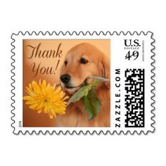>>>Cheap Price Guarantee          	Golden Retriever With Flower Thank You Postage Stamp           	Golden Retriever With Flower Thank You Postage Stamp today price drop and special promotion. Get The best buyDiscount Deals          	Golden Retriever With Flower Thank You Postage Stamp Review o...Cleck Hot Deals >>> http://www.zazzle.com/golden_retriever_with_flower_thank_you_postage-172328468987299325?rf=238627982471231924&zbar=1&tc=terrest