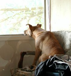 Think about it, your dog spends his whole life waiting for you to come home....