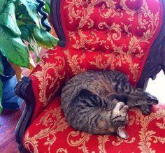 Hemingway's cat - Key West