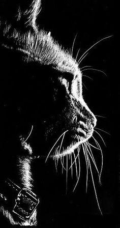 Online Art Class - How to Scratchboard Animals - Paint Basket TV Kratz Kunst, Regard Animal, Black Paper Drawing, Scratchboard Art, Image Chat, Scratch Art, Tier Fotos, Cat Drawing, Drawing Ideas