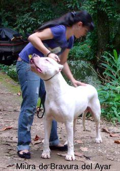 Dog Argentino, Mans Best Friend, Best Friends, Mastiff Breeds, Garden Sculpture, Pitbulls, Dogs, Outdoor, Hunting Dogs