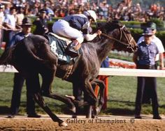 Pleasant Colony. 1981 Kentucky Derby winner. Jockey: Jorge Velasquez. Winning time: 2:02:00