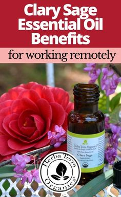 Essential oils like Clary Sage can help to enhance one's emotional resilience while dispelling negative thoughts and feelings. This oil can also help you regain focus while working from home, or remote schooling. Saving LOTS of money while taking care of your mental health using non-toxic, 100% natural, cruelty-free products is the BEST SOLUTION for your health and the planet in the long term.  Tap the Image for more info. #herbaterraorganics #organicoils #essentialoilsforfocus Helichrysum Essential Oil, Clary Sage Essential Oil, Lemongrass Essential Oil, Orange Essential Oil, Essential Oils For Memory, Oils For Energy, Emotional Resilience, Aromatherapy Recipes, Citrus Oil