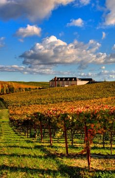 Domaine Carneros vineyards and winery, Napa Valley, CA (Photo: Mars Lasar). Sparkling wine by Tattinger champagne France.