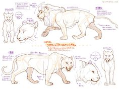 Lion - poses - sketch- top: male , bottom: female