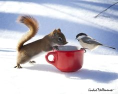 Two of my favorite creatures, squirrels and chickadees!