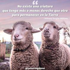 Totalmente de acuerdo  En la foto Benjamín junto a su mejor amigo Estelita.  #animals #animal #photooftheday #cute #pets #instagood #animales #cute #love #nature #animallovers #nature #beautiful #pretty #happy #picoftheday #instadaily #amazing #instalike #bestoftheday #smile #friends  #mothernature #instachile #inspiration #rescue #inspirational #vegan #vegan #govegan #lamb #sheep #cordero