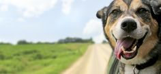 Your Dog Really Does Get You - http://garnetnews.com/2016/08/30/dog-really-get/