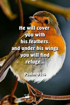 Scripture Quotes Love-He will cover you with his feathers and under his wings you will find refuge. Bible Quotes About Faith, Biblical Quotes, Bible Verses Quotes, Jesus Quotes, Faith Quotes, Heartbreak Quotes, Psalm 91 4, Prayer Scriptures, Healing Scriptures