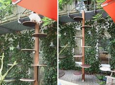 Exactly the idea I am looking for... diy cat tree | Cool Cat Ladder Spotted in Germany | moderncat :: cat products, cat ...