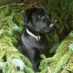 My puppy Trekker